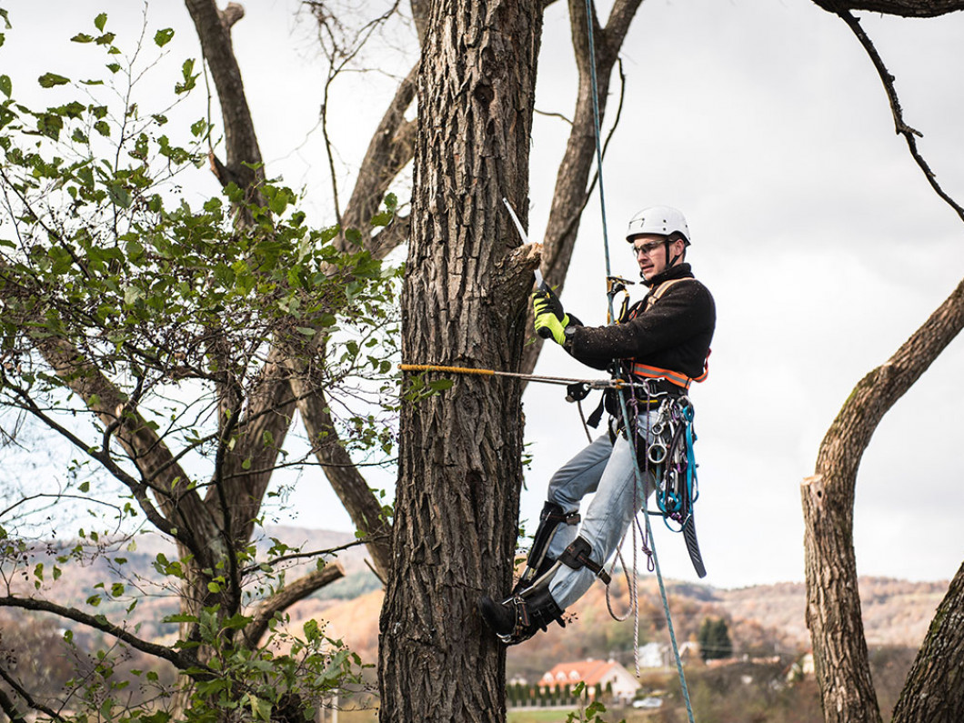 Make us your top choice for tree removal services